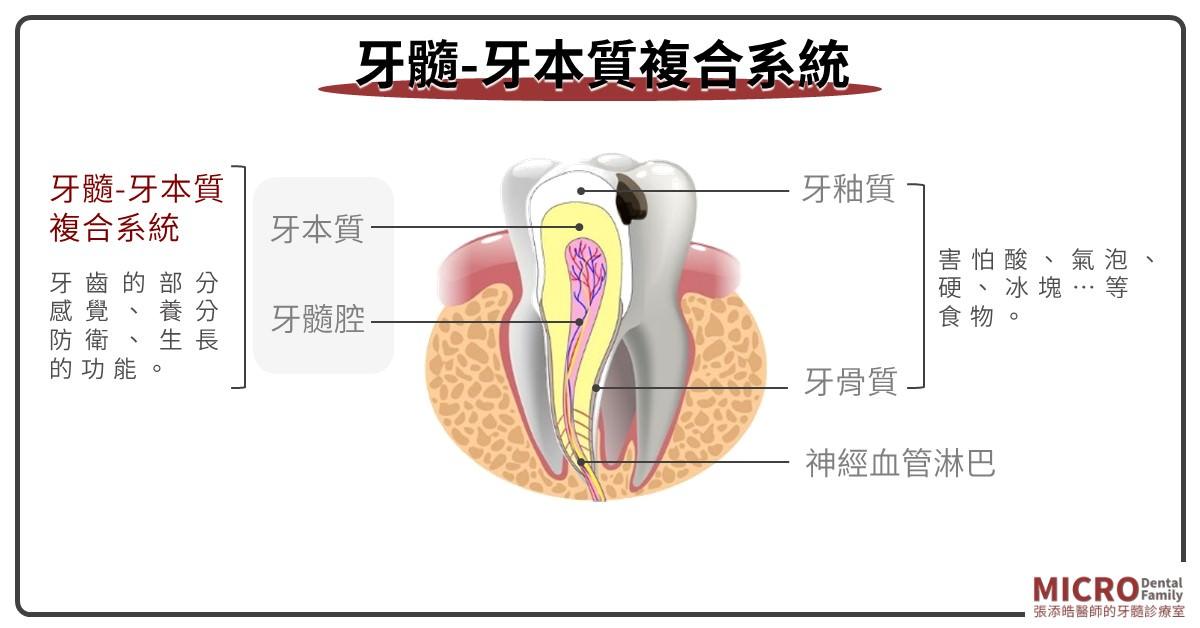 牙髓牙本質