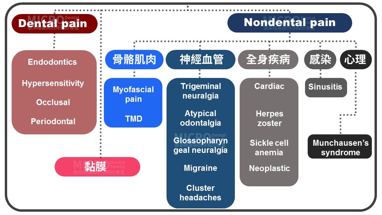 根管治療抽神經前中後疼痛3