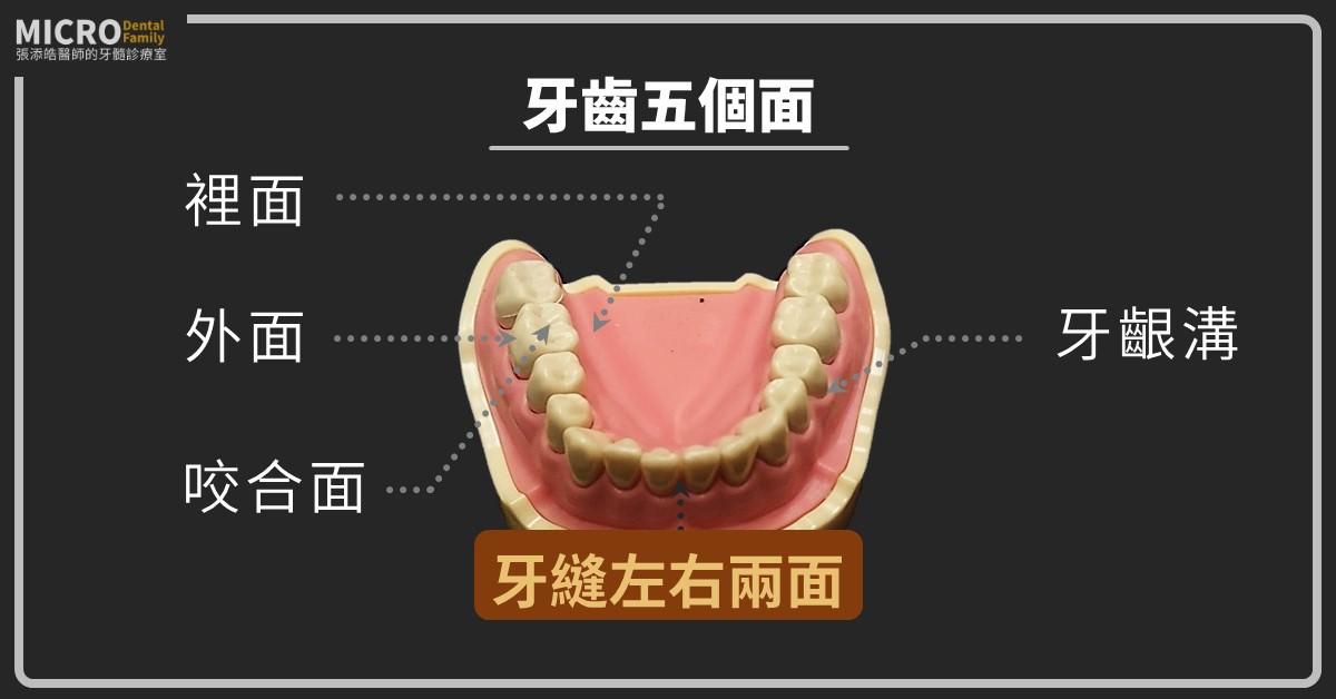 牙齒五個面
