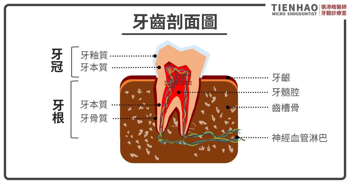 戴牙套一定要抽神經嗎
